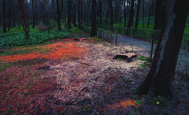 cut trees and sawdust in parque Retiro; Madrid (2017)