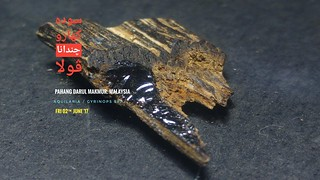 Resinous Agarwood | by Agarwood For Life