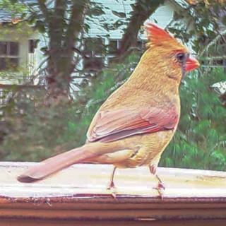 Autumn Cardinal