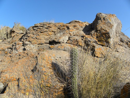 cacti cactus chile chiloensis coquimbo felsen fnrrb2167 ka3572s kakteen kaktus montepatria rb2167 reise standort trichocereus
