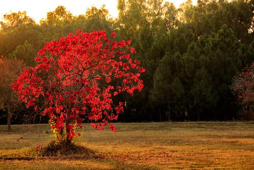 orange red yellow green park nature tree leaves golden sunset sundown sunlight pakistan islamabad canon 6d landscape