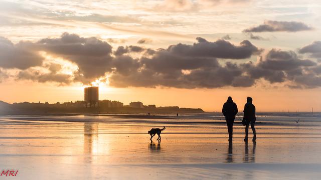 Promenade avec le chien