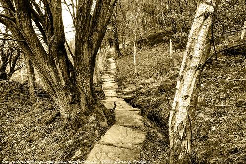 The Path from Donkey Bridge.