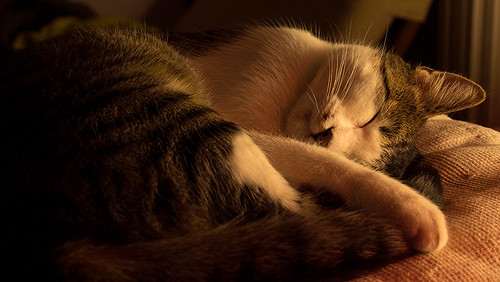 Kattepus | by kebman