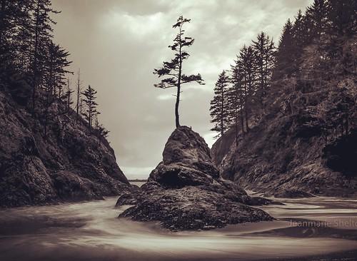 longexposure longshot monochromatic monotone washingtonstate ocean nikon landscape trees beach shore cove capedisappointment jeanmarieshelton