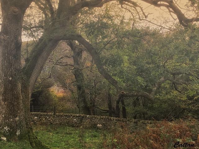 Magical Woodland- Aber Falls, North Wales, England