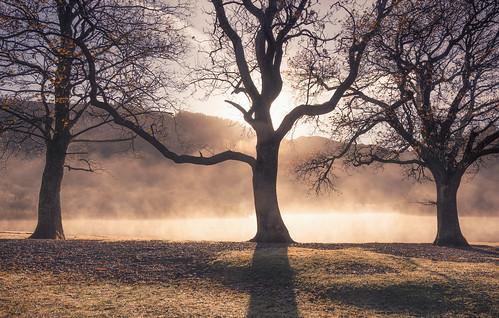 derwentwater cumbria lakedistrict nationalpark england greatbritain misty mist sunrise autumnal autumn lake shadows silhouettes atmospheric mood landscapephotography landscapes strandshagbay catchphrase nikond7100