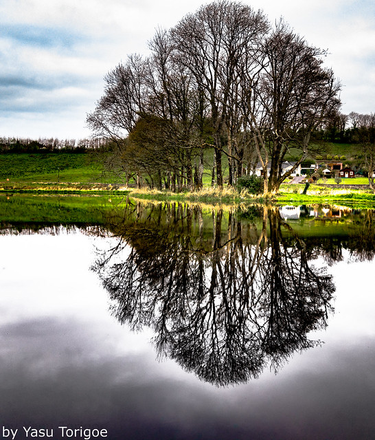 Reflection on a pond at Turlough Park House Mayo Ireland 27