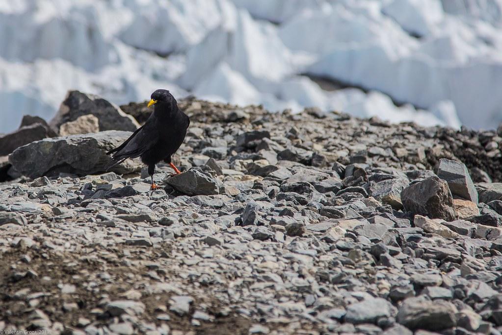 wild_Himalaya_2017_02_stancuta alpina 02
