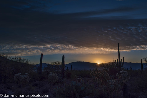 prickly pear cactus cholla arizona sunrise saguaro sabino canyon tucson pricklypearcactus sabinocanyon
