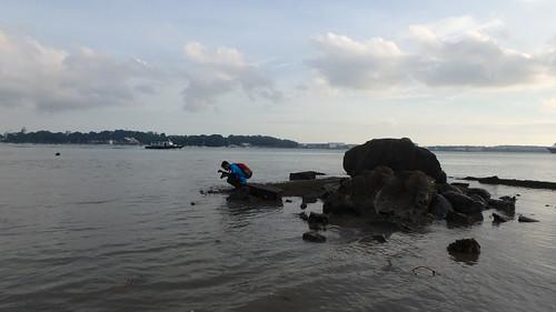 Exploring Pulau Ubin rocky shores