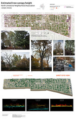 Estimated tree heights in Lexington's North Limestone neighborhood