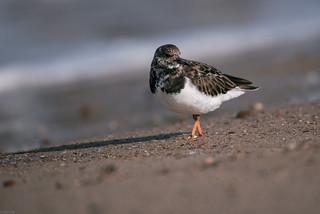 Wading bird   by knipslog.de