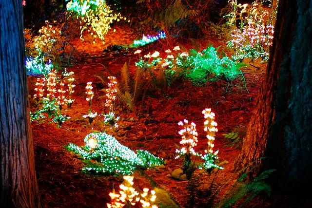 23rd Annual Garden d'Lights at the Bellevue Botanical Garden