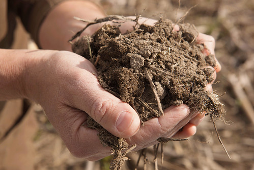 A person holding soil in hands | by USDAgov