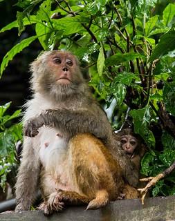 in Kathmandu_05 monkies   by Valentin Groza