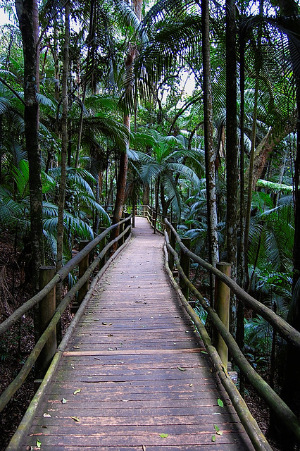 The Path.... DSC_4901_lzn