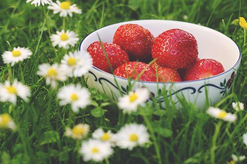 jordgubbar1 | by socialdemokraternajonkopingslan