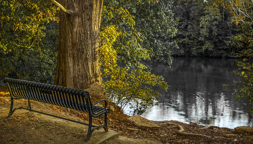 happybenchmonday austin texas bench park citypark stream lake redbudisle texashillcountry