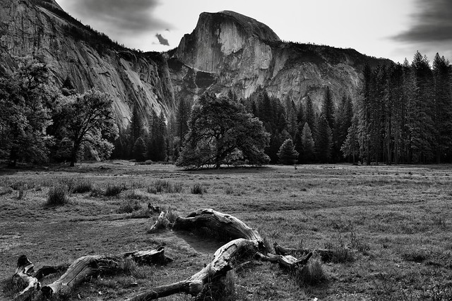 A Meadow Setting for a View to Half Dome (Black & White, Yosemite National Park)
