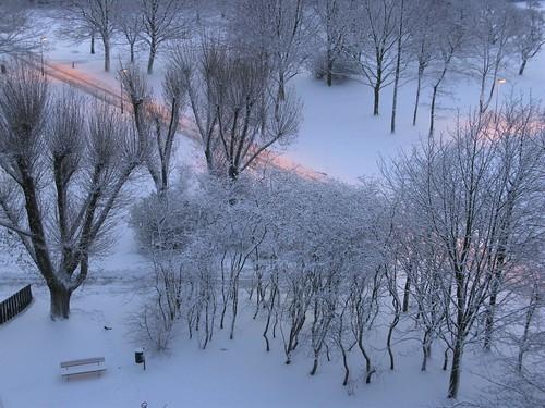 december 2010 malmö skåne winter vinter snö snow trees träd sverige sweden gröndal g9 canon teknikern päronskogen