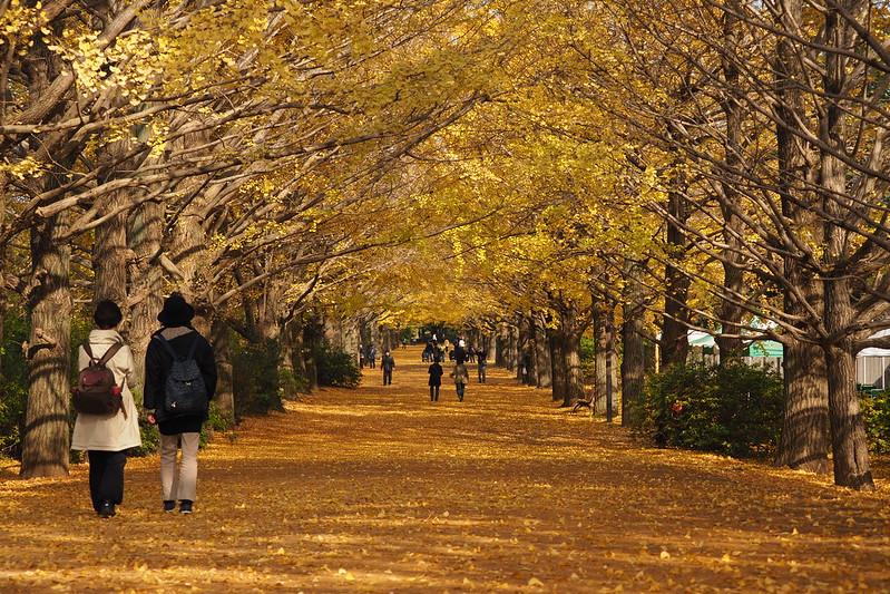昭和紀念公園|立川