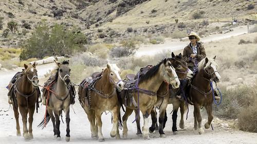 america cowboytrailrides horsebackriding nevada redrockcanyon southwest usa animals cowboy cowgirl horseriding horses nearlasvegas riding tour tourism western