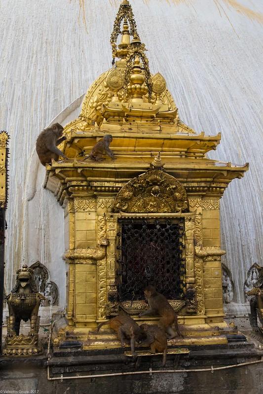 in Kathmandu_09 altar cu maimute