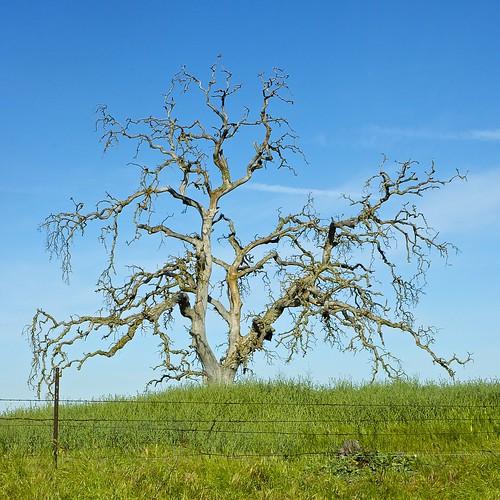 california usa landscape nikon roadtrip nikond70s farmland roadtripusa dslr backroads sanjoaquincounty sanjoaquincountycalifornia