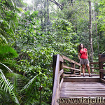 10 Viajefilos en Australia, Cape Tribulation 008