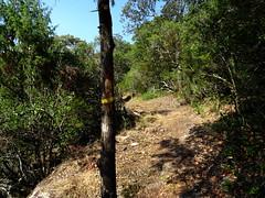 Vue du sentier et d'une balise enroulée autour d'un pin