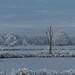 Winter Boerenveensche Plassen by capreolus