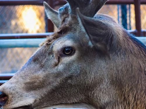 Zoológico Parque Centenario