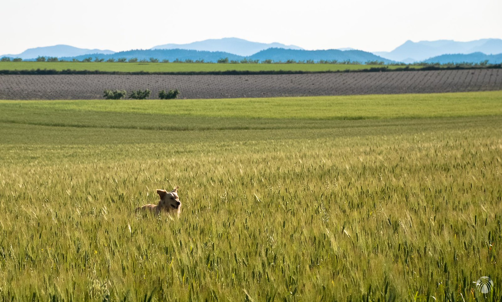 Buscando conejos