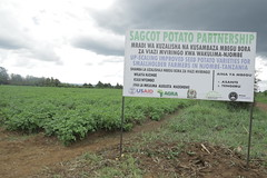 SAGCOT Potato Partnership