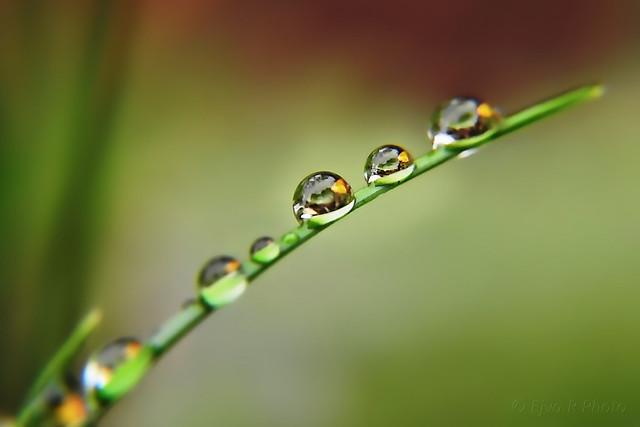 Autumn Dew Drops / Ősz Harmatcseppek