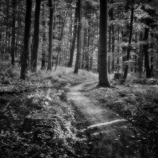 forest path copy | by bwstock