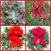 Holiday Wreaths - — Photo Courtesy Brian Wheat, AAF, PFCI, of Lafayette Florist, Gift Shop & Garden Center in Lafayette, Colorado. www.lafayetteflorist.com