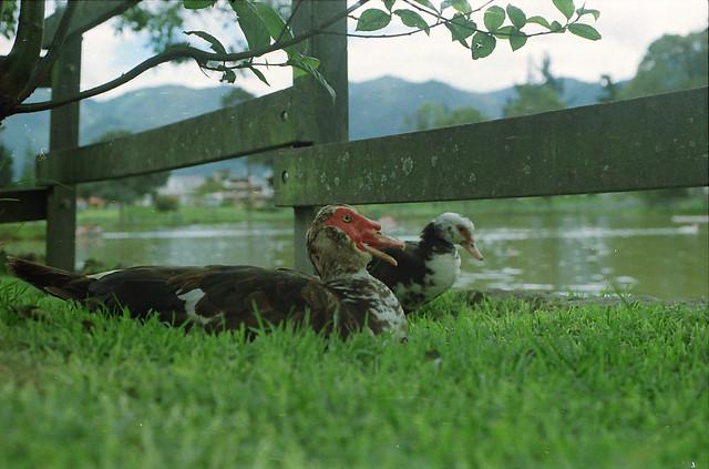 Nikon FG - Kodak 200 _0035