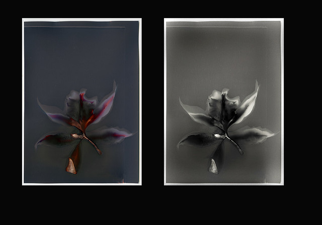 the mystery of dark orchids...