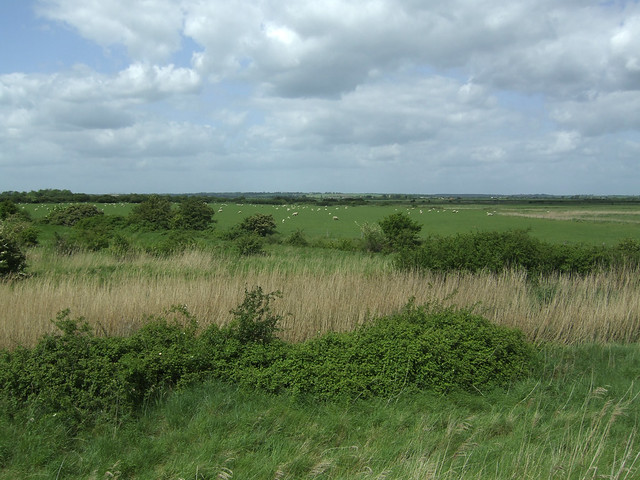 Old Hall Marshes