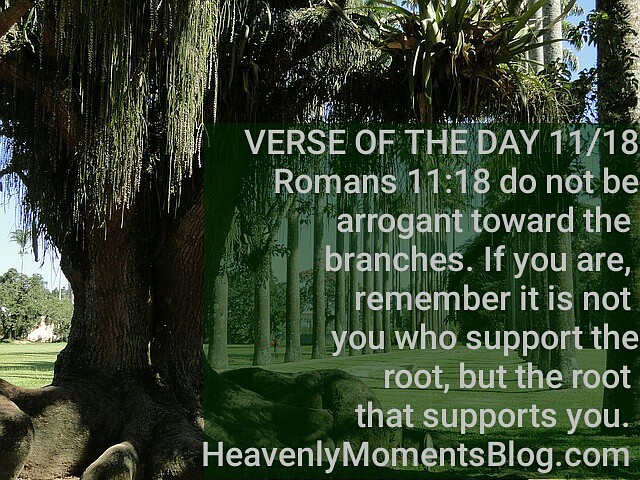 VERSE OF THE DAY 11/18 | VERSE OF THE DAY 11/18 Romans 11:18