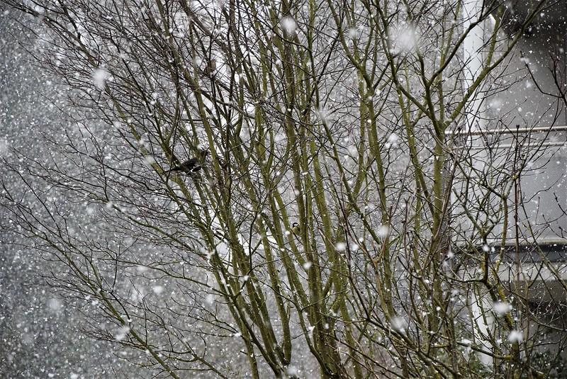 Snow 26.11 (13)
