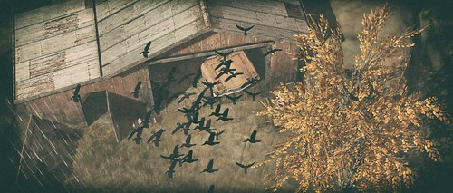 Aspen Fell - Birds & Barn | by `*•.¸Whimsy¸.•*´