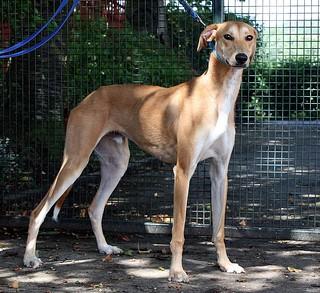 mario1   by Greyhound Gap