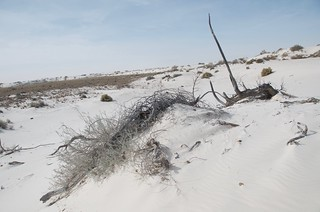 White Sands fallen tree | by Pierre Yeremian