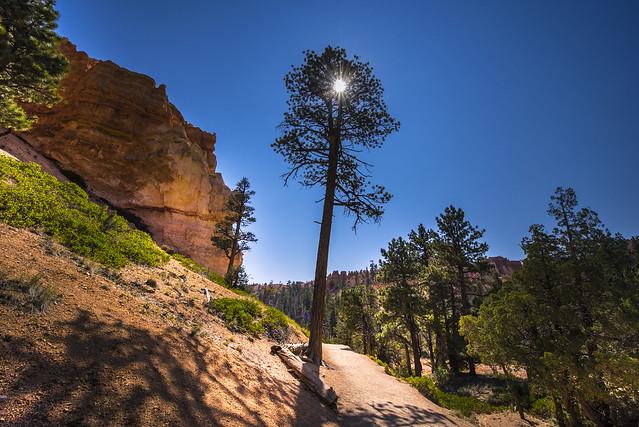 Hiking on the Navajo Loop Trail in Bryce Canyon - Utah - USA