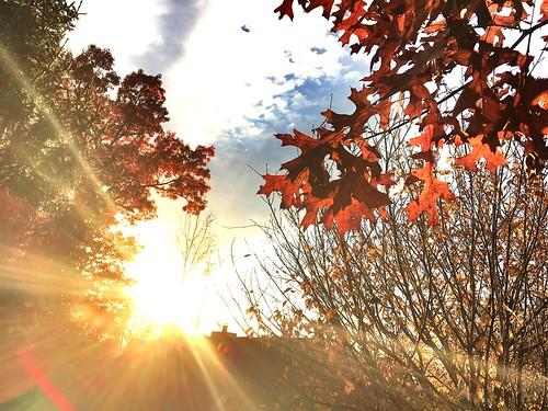 leaves winter sunset evening goldenhour rays lens flare iphone neighborhood house
