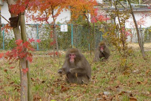 列車が走らなくなった旧熊ノ平駅には線路や施設が残されているが、近隣に住む人がいない山の中で、野生動物の生活の場になっている