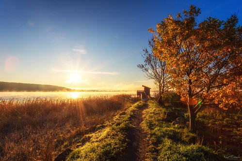 sunshine path autumncolours landscape nature fall vestfold norway leaves tree forest birdwatch colours colors sunlight sunrise autumn october warmglow tønsberg no
